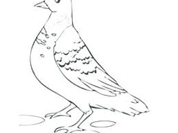 Coloring Pages Dove Page Perched Mourning Free Printable White Home Turtle Doves Peace Cameron Animals Pea