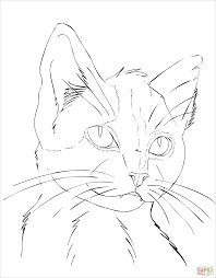 Click The Cat Portrait Coloring Pages To View Printable Version Or Color It Online Compatible With IPad And Android Tablets