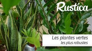entretien plante grasse d interieur les plantes vertes les plus faciles