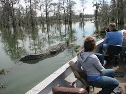 alligator bayou lake update louisiana cajun country sw tours breaux bridge all you need to