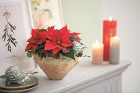 diy zum advent frische deko ideen für den weihnachtsstern
