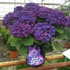 New Varieties Of Plants Ready To Brighten Yards