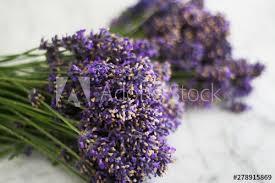 lavandula angustifolia lavendel heilkraut mit beruhigender
