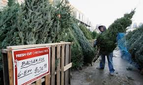 Plantable Christmas Trees Nj by The Christmas Tree Shortage Could Last For Years The Atlantic