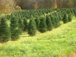 Plantable Christmas Trees Columbus Ohio by Columbus Ohio Area Christmas Tree Farms Choose And Cut Christmas