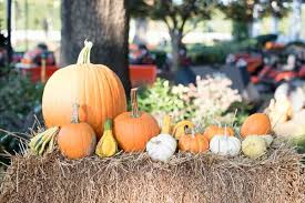 Pumpkin Patch Greenbrier Arkansas by Latest News Apple Tree Learning Center