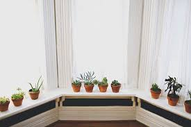 Plants For Bathroom Without Windows by 20 Unforgettable Indoor Plant Displays U0026 Ideas
