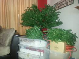 Pre Lit Christmas Tree No Lights Working by Snow Day 2013 Honeybee Mama Web 2013