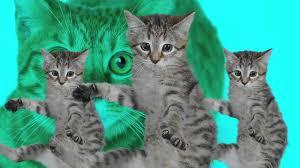 kitty cat best kittycat song official feat grumpy cat