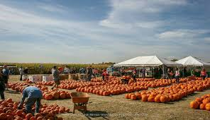 Pumpkin Patch Fort Collins by Behold The Pumpkin Patch Our Community Now At Colorado