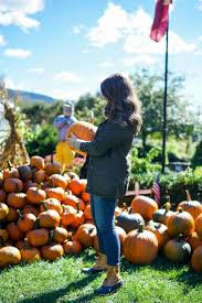Pumpkin Picking Long Island Ny by The 25 Best Pumpkin Picking Ideas On Pinterest Fall Pics