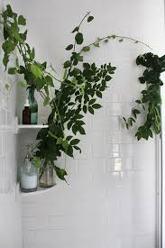 Best Plant For Your Bathroom by Turning Your Shower Space Into A Sanctuary Free People Blog