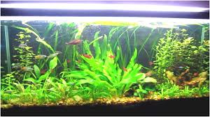 Aquascape Archives - JaviDecor | JaviDecor Out Of Ideas How To Draw Inspiration From Others Aquascapes Aquascaping Aquarium The Art The Planted Plant Stock Photo 65827924 Shutterstock Continuity Aquascape Video Gallery By James Findley Green With River Rocks Aqua Rebell Qualifyings For 2015 Maintenance And Care Guide Outstanding Saltwater Designs 2012 Part 1 Youtube Dennerle Workshop Fish