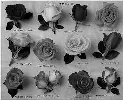 White Flowers Tumblrtumblr Backgrounds Black And Vintage Drawing Kd6krbmt