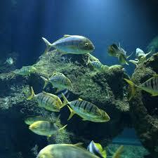 photo0 jpg picture of aquarium la rochelle la rochelle