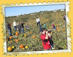 Southern Illinois Pumpkin Patches by Northern Illinois And Southern Wisconsin Pumpkin Patches Offer