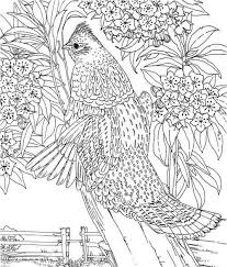 107 Best Coloring Images On Pinterest