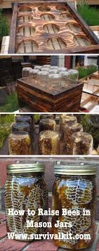 Best 25+ Raising Bees Ideas On Pinterest | Honey Bee Keeping ... Hive Time Products A Bee Adventure For Everyone Bkeeping Everything You Need To Know Start Your First Best 25 Raising Bees Ideas On Pinterest Honey Bee Keeping The Bees In Your Backyard Guide North Americas Joseph Starting Housing And Feeding Top Bar Beehive Projects Events Level1techs Forums 562 Best Images Knees 320 Like Girl 10 Mistakes New Bkeepers Make Splitting Hives Increase Cookeville Bkeepers Nucleus Colony Or How A 8 Steps With Pictures