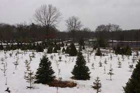 Christmas Tree Shop Warwick Ri by 10 Ways To Celebrate Christmas In Rhode Island With The Kids
