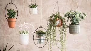 schöne zimmerpflanzen für ein stylisches zuhause gala de