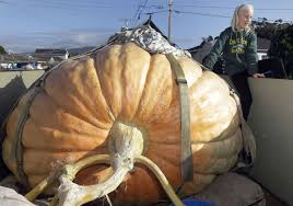 Atlantic Giant Pumpkin Record by Photos 25 Giant Pumpkins To Celebrate Halloween Home And Garden