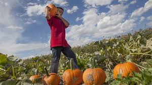 Pumpkin Patch Ogden Utah by Halloween Season Begins With Spooky Events More This Weekend In
