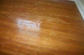 wood or laminate flooring for dogs flooring designs