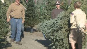 Baltimore County Christmas Tree Disposal by Boy Scouts Looking To Sell 300 Christmas Trees