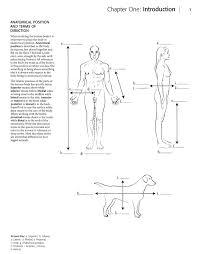 Anatomy Coloring Book Latin Anatomia Dibujos