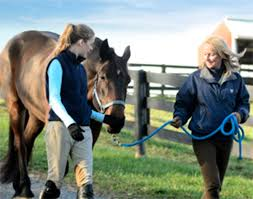 For Owners Leasing Your Horse Can Help Defray The Cost Of Board And Care