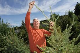 Christmas Tree Shop Middletown Ny by R I Farmers Race To Sculpt Christmas Trees News