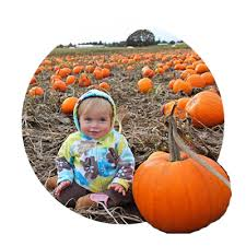 Canby Pumpkin Patch by You Pick Farms In The Greater Portland Oregon Area