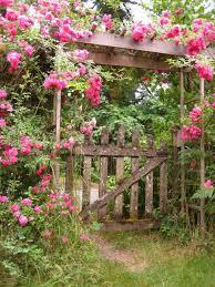 20 Best Flowers Vines Shrubs Images On Pinterest