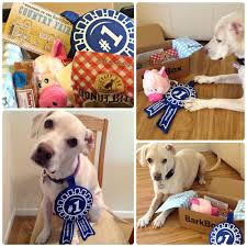 BarkBox Country Fair Blue Ribbon Winner + Coupon For Your ... Bark Box Coupons Arc Village Thrift Store Barkbox Ebarkshop Groupon 2014 Related Keywords Suggestions The Newly Leaked Secrets To Coupon Uncovered Barkbox That Touch Of Pit Shop Big Dees Tack Coupon Codes Coupons Mma Warehouse Barkbox Promo Codes Podcast 1 Online Sales For November 2019 Supersized 90s Throwback Electronic Dog Toy Bundle Cyber Monday Deal First Box For 5 Msa
