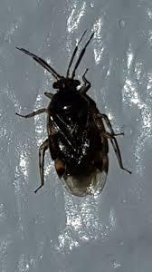 käfer im wohnzimmer was für welche insekten zimmer