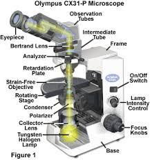 Polarized Light Microscopy CX31 P Polarized Light Microscope