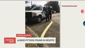 Giant White Snake Found Near I-35 In North Texas | CW33 Dallas / Ft ... Texas Truck Deals Car Dealer In Corsicana Tx North Central Council Of Governments Progress 2018 Lifted Diesel Trucks Luxury Cars Sales Dallas Arlington Auto Repair Dans And Ambest Travel Service Centers Ambuck Bonus Points Dallasfort Worth Weather News Coverage Nbc 5 Storage Facility Mansfield Gets City Smart The Parts Of 287 Closed After Fiery Crash Electra Energy Simplified Corp 2006 Ford F350 Super Duty Crew Cab Flatbed Pickup Truck It