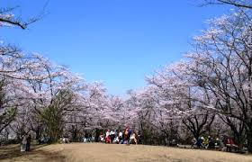 comment 馗lairer une cuisine 英語保育園 プリスクール blue sky international の日誌 big park