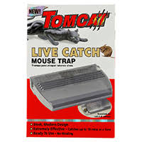 tom cat mouse trap mice tomcat
