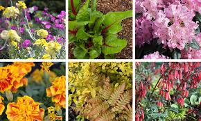 Plant Nursery Gardening Supplies and Decor Water Features and