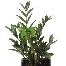 plantes vertes d interieur bien quelle plante d interieur 2 plante verte page 7