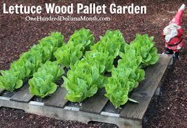 Pallet Gardening 101 Creating a Pallet Garden e Hundred