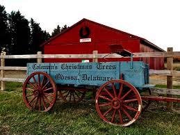 Free Pumpkin Patch Charleston Sc by Coleman U0027s Christmas Tree Farm Coleman U0027s Christmas Tree Farm