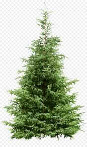 Christmas Tree Pine Noble Fir