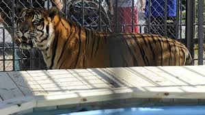 Wwltv.com   Report: Truck Stop Tiger Euthanized After 17 Years As ... 2001 Used Ford Super Duty F350 Drw Xlt Meca Truck Chrome Accsories Stocks Bumpers For Freightliner 595 Davie Fl Stops Pit And Other Overtheroad Sanctuaries Best Truck Stop In Florida Busy Bee Live Oak Joplin Missouri Petro Stop Youtube Commercial Real Estate In 33150 Nogalestruckstopjpg Warren Buffetts Berkshire Bets Big On Americas Truckers Buys Press Release Safety Standdown New 2018 F150 For Sale Fulton Ms How A Tunisian Immigrant Staged The Simple Deadly Attack Nice