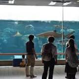 神戸市立須磨海浜水族園, 須磨区, 神戸市, 水槽