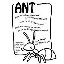 The Learning Alphabet With Ant