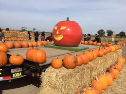 Pumpkin Patch Santa Rosa by 7 Charming Pumpkin Patches In Northern California That Are Picture