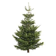Fraser Fir Christmas Trees Delivered by Christmas Trees Liverpool Free Delivery Aigburth
