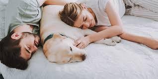 hund und katze im bett wissenswertes schlafen magazin